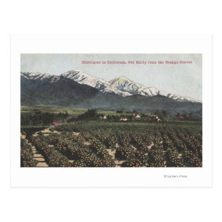 Orange Groves with Old Baldy Mt in Distance Postcard