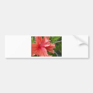 Orange Hibiscus Bumper Sticker
