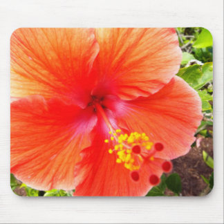 Orange Hibiscus Mouse Pad