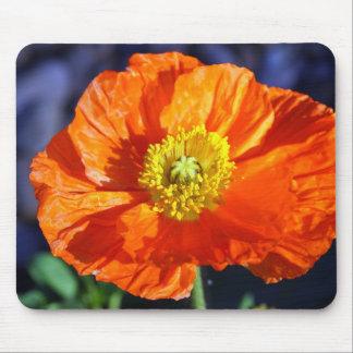 Orange Icelandic Poppy Mouse Pad