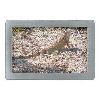 Orange Iguana hunts Belt Buckle