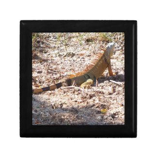 Orange Iguana hunts Gift Box