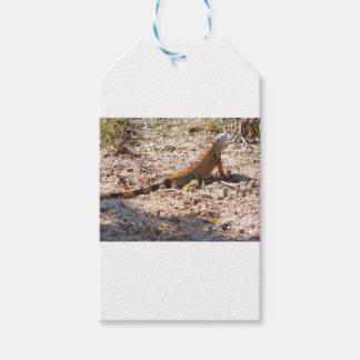 Orange Iguana hunts Gift Tags