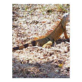 Orange Iguana hunts Letterhead
