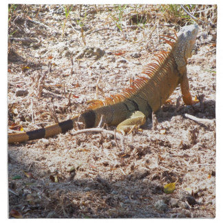 Orange Iguana hunts Napkin