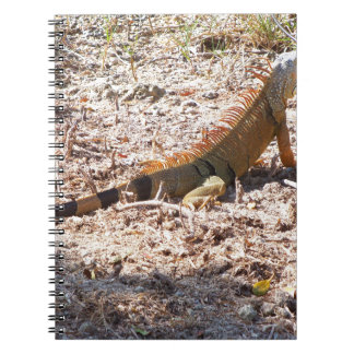 Orange Iguana hunts Notebook