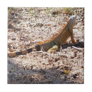 Orange Iguana hunts Tile