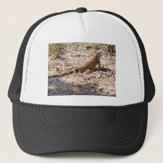 Orange Iguana hunts Trucker Hat