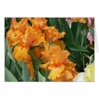 Orange Iris Card