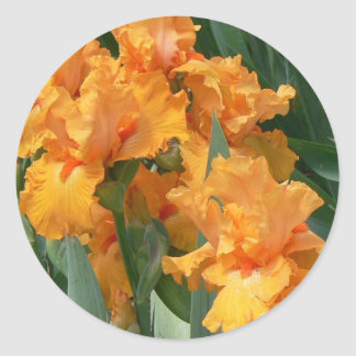 Orange Irises Classic Round Sticker