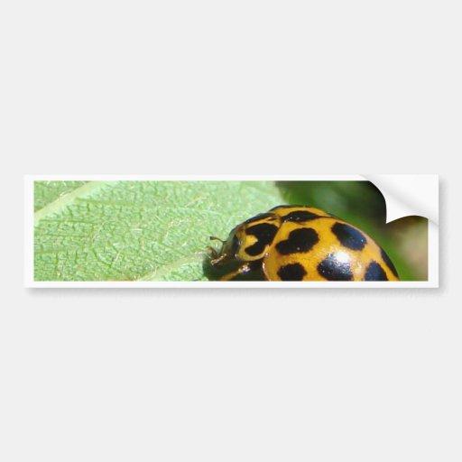 Orange Lady Bettle Bumper Stickers