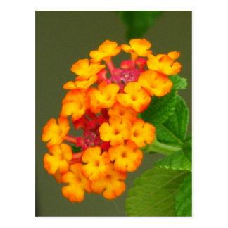 Orange Lantana Postcard