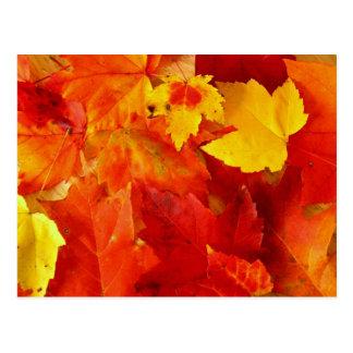 Orange Leaves New England Foliage Postcard