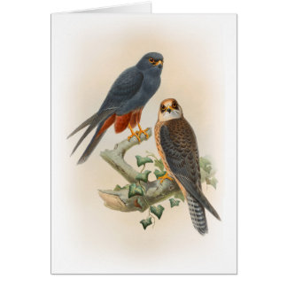 Orange-legged Hobby Falcon Gould Birds of Britain Card