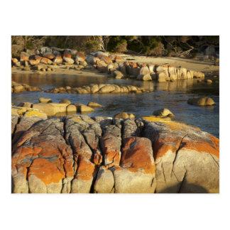Orange Lichen on Rocks, Binalong Bay, Bay of Postcard