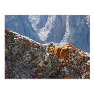 Orange lichens growing on rock face postcard