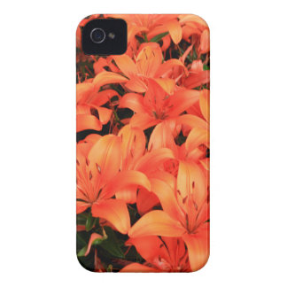 Orange liliums in bloom iPhone 4 covers