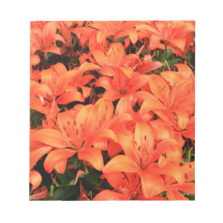 Orange liliums in bloom notepads