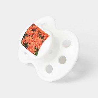 Orange liliums in bloom pacifier