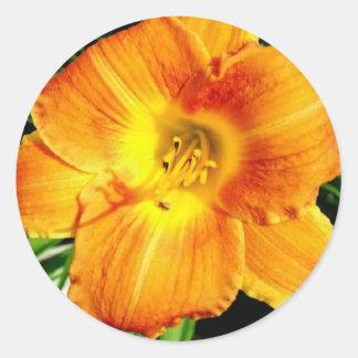 Orange Lilly Sticker