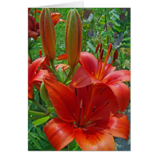Orange Lily Blossoms Greeting Card