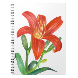 Orange Lily Botanical Illustration Spiral Notebook