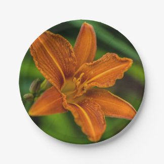 Orange lily flower paper plate