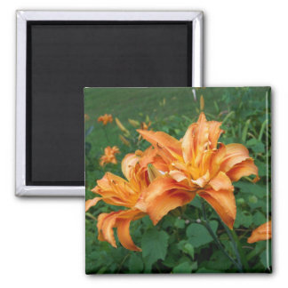 Orange Lily Photograph Magnet