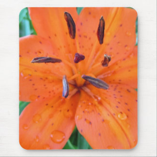 Orange Lily with water drops Mouse Pad