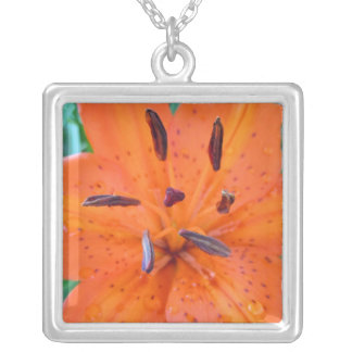Orange Lily with water drops Silver Plated Necklace