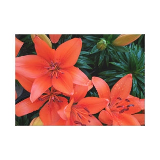 Orange Lily Wrapped Canvas