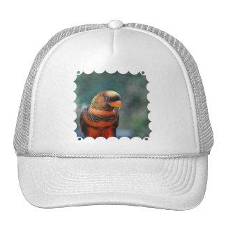 Orange Lorikeet Hat