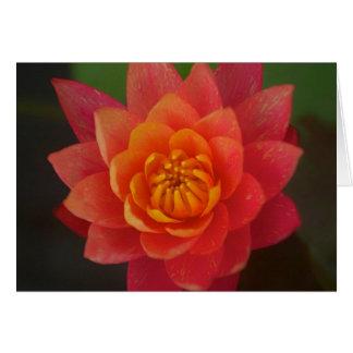 Orange Lotus Card