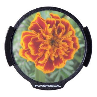 Orange Marigold Flower LED Window Decal
