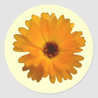 Orange Marigold Sticker