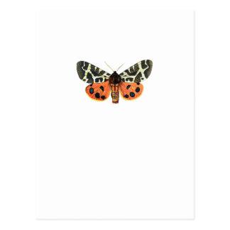 orange moth postcard