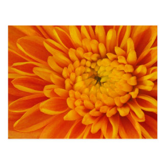 Orange Mum Floral Postcard