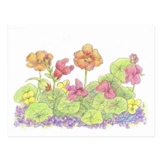 Orange Nasturtium Pink Snapdragon Flowers Postcard