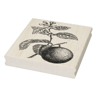 Orange on Branch with Blossoms Rubber Stamp