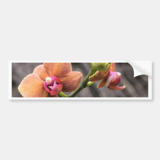 Orange Orchid Bumper Sticker