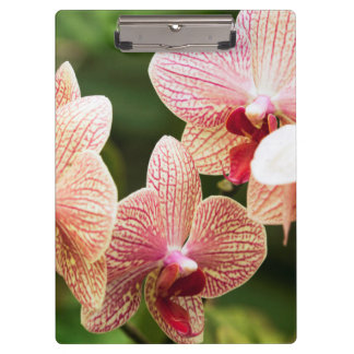 Orange Orchid Hybrid, South Africa Clipboards