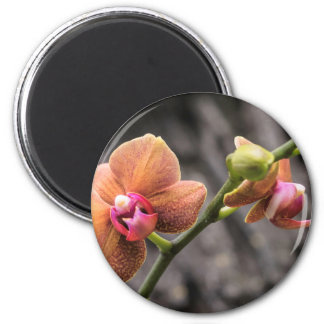 Orange Orchid Magnet