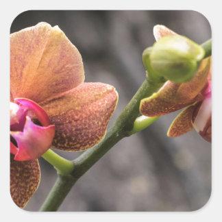 Orange Orchid Square Sticker