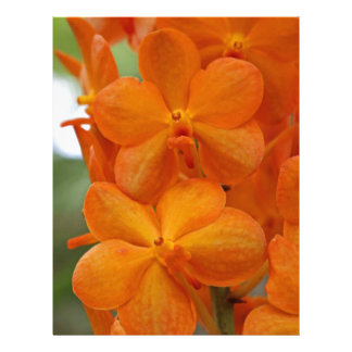 Orange Orchids Letterhead