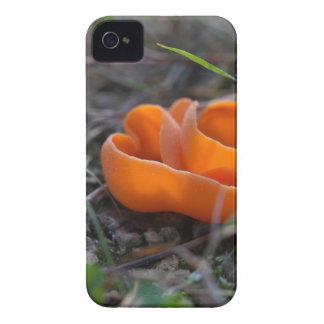 Orange peel fungus, Aleuria aurantia iPhone 4 Case-Mate Case