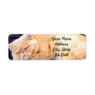 Orange Persian Cat Return Address Label