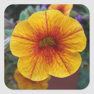 Orange Petunia Square Sticker