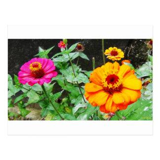 Orange & Pink Flowers Postcard