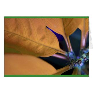 Orange poinsettia with Spanish text Card