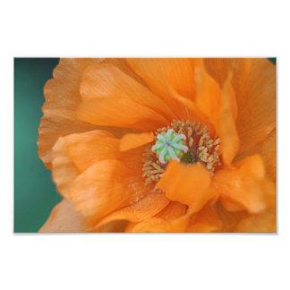 Orange poppy art photo